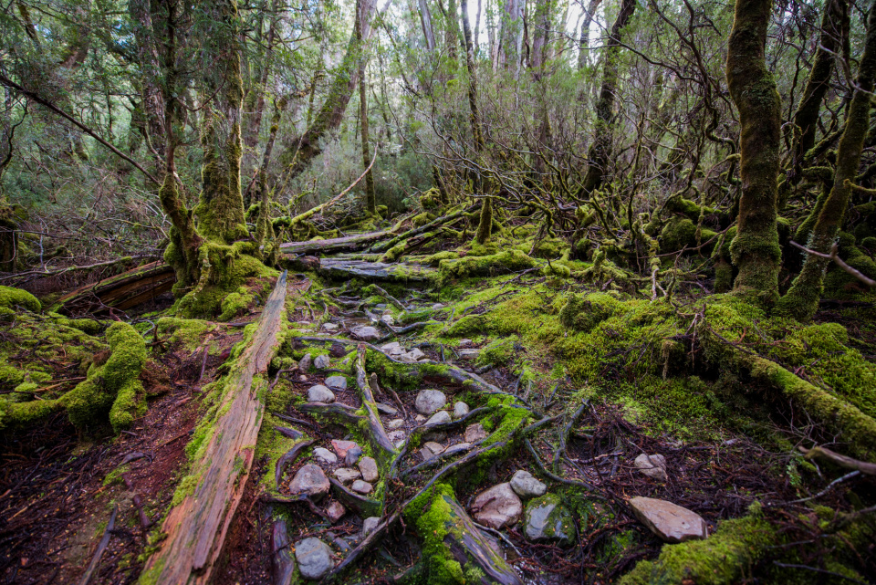 Change Overnight Tasmania Wilderness Land Conservancy